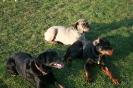 Hundeschule